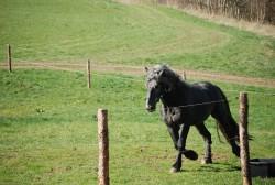 ranč - chalupa k pronájmu