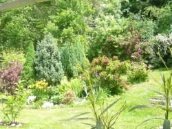 zahrada - chalupa k pronájmu